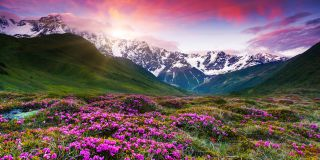 Blossoming mountains