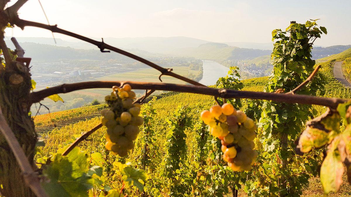 Wein- & Schlemmertage an der Mosel 3 Nächte- Angebotsrate- nicht erstattbar