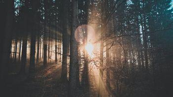 Wald vor lauter Bäumen
