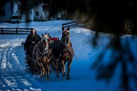 Pferdeschlittenfahrt im Ahrntal | Alpenpalace Luxury Hideaway & Spa Retreat