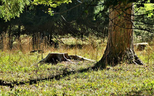 Waldbaden - Achtsamkeitstraining