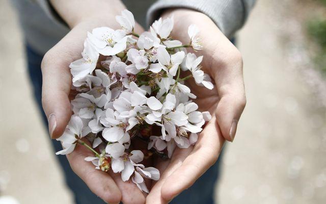 BlütenGlück-Tage