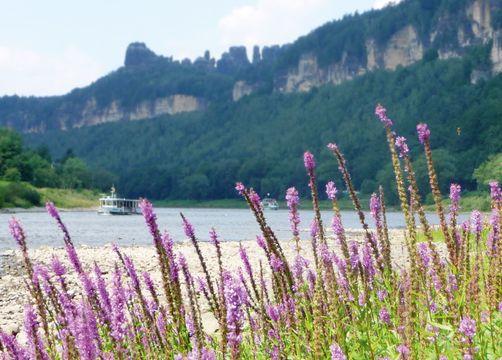 Bio- & Nationalpark Refugium Schmilka, Bad Schandau OT Schmilka, Sassonia, Germania (19/43)