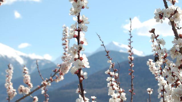 Frühlingswochen