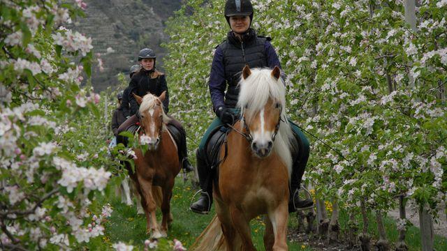 Reiturlaub im Vinschgau