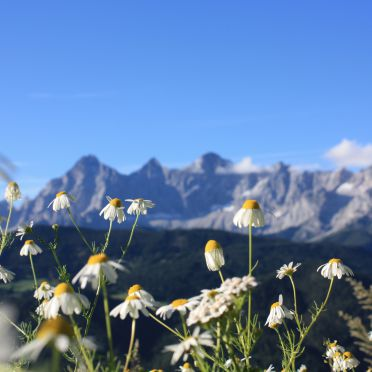 Chalet Dachstein , View