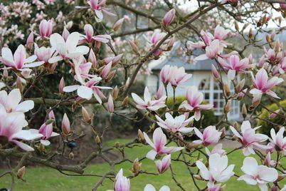 Frühlingsspartage