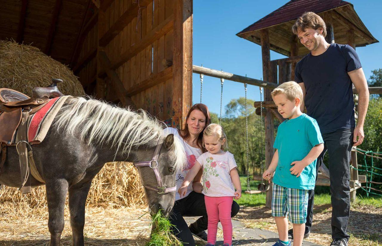 imp_schreinerhof_familie-pony.jpg