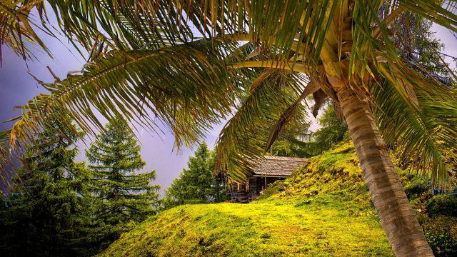 Almen statt Palmen
