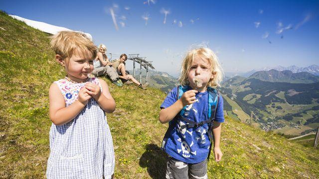 Bergfrühling zur Alpenrosenblüte