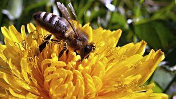 Retten wir die Bienen !
