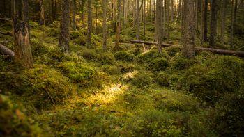 Eibsee-Spüren Sie die Kraft der Natur