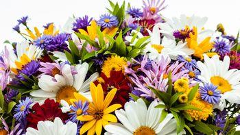 Ein saisonaler Blumenstrauß - bei Anreise auf dem Zimmer
