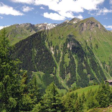 summer - surroundings, Almhütte Hoanza, Matrei in Osttirol, Tirol, Tyrol, Austria