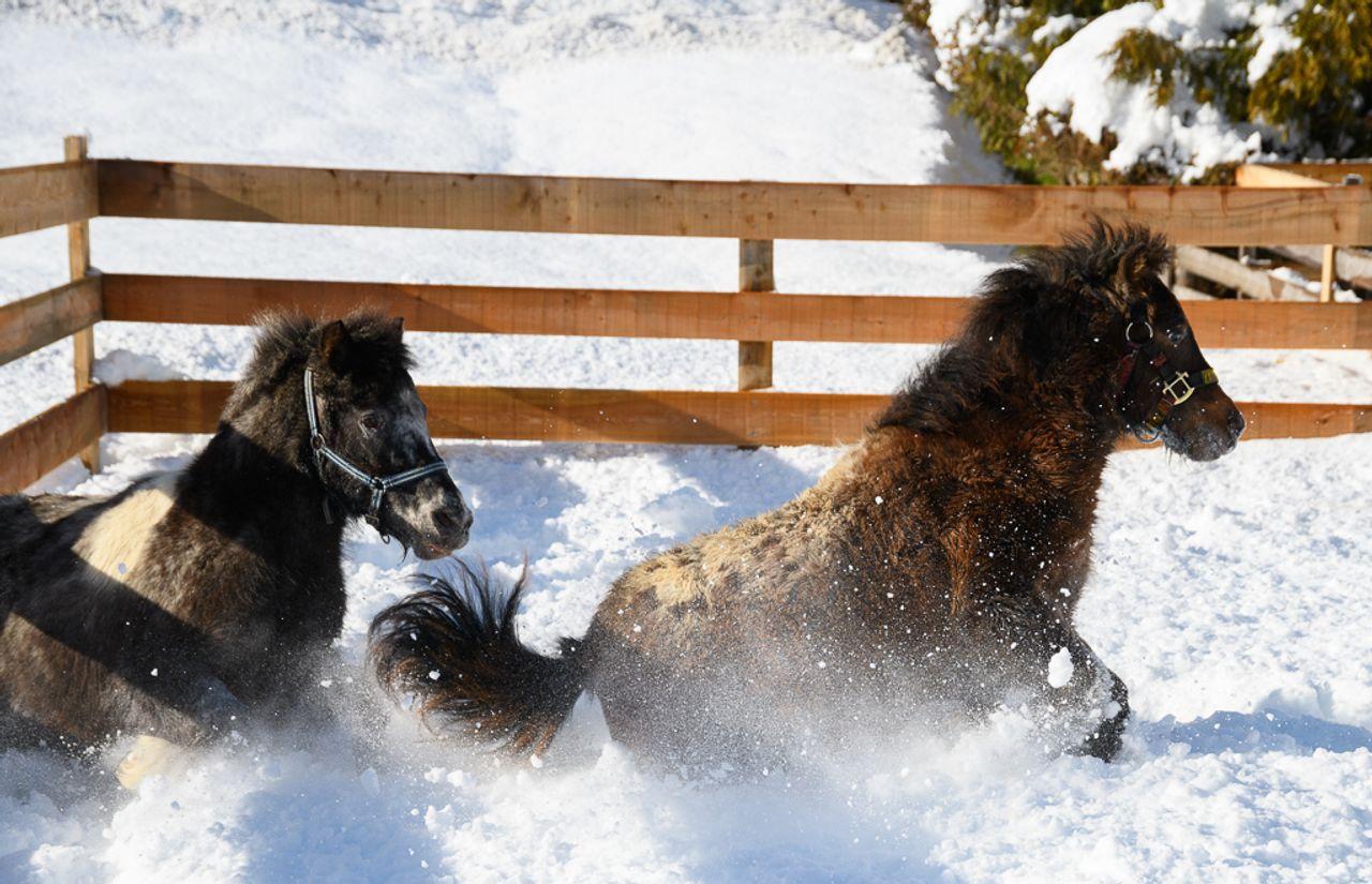 Ponytag mit Ponyreiten