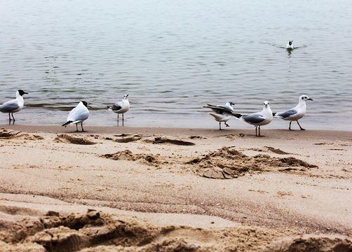 Biohotel Insel Usedom: Urlaub an der Ostsee - Gutshof Insel Usedom, Mellenthin, Mecklenburg-Vorpommern, Deutschland