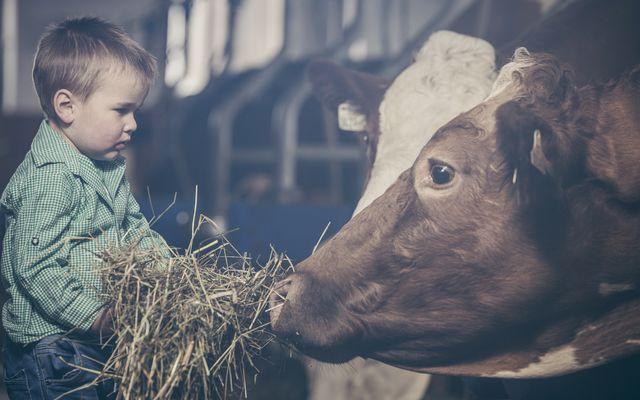 Bauernhof Erlebnisse