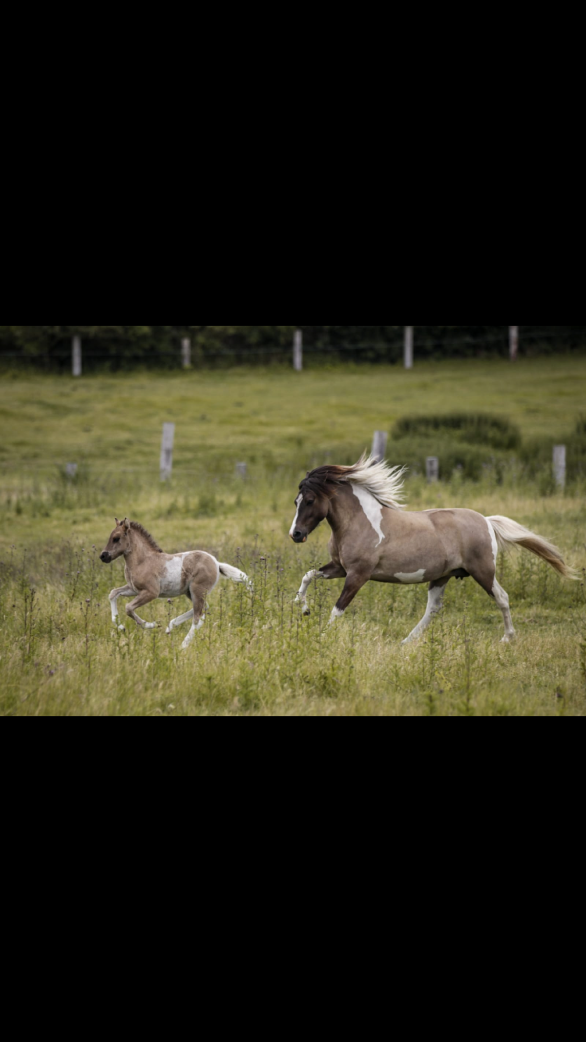 Ponyreiten an der Ostsee