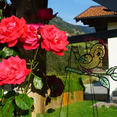 Summer, Ferienhaus Wandlehen in Großarl, , Salzburg, Austria
