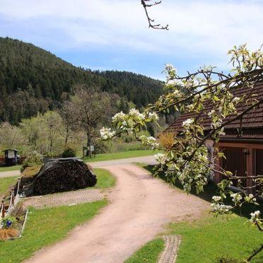 Außen Winter 13, Ferienhütte Backhäusle, Alpirsbach, Schwarzwald, Baden-Württemberg, Deutschland