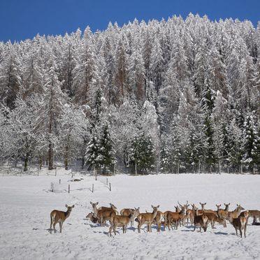 Innen Winter 23, Chalet Glockner, Heiligenblut, Kärnten, Kärnten, Österreich
