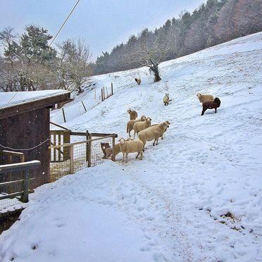Innen Winter 29, Ferienchalet Feichtinger, Prigglitz, Niederösterreich, Niederösterreich, Österreich